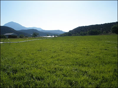 50 ACRES OF PASTURE ARE AVAILABLE
